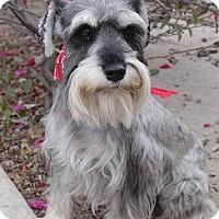 Adopt A Pet :: BAMBOO - Irvine, CA
