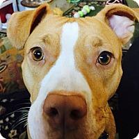 Adopt A Pet :: Momma - Oak Creek, WI