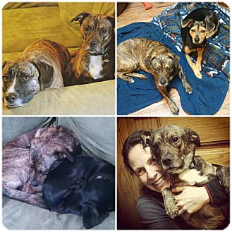 Terrier (Unknown Type, Medium) Mix Dog for adoption in Marietta, Georgia - Rolo