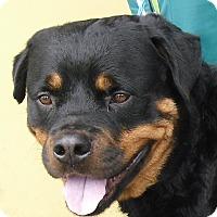 Adopt A Pet :: Jackson - Pembroke Pines, FL