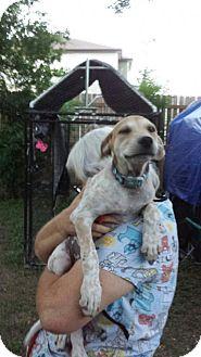 Beagle Mix Dog for adoption in Olympia, Washington - Dryfus