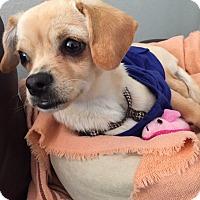 Adopt A Pet :: Paris - Santa Ana, CA