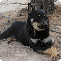 Adopt A Pet :: Miles - Alamogordo, NM