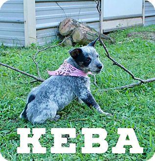 Terrier (Unknown Type, Medium) Mix Puppy for adoption in DeForest, Wisconsin - Keba