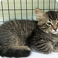 Adopt A Pet :: Ruben - Grants Pass, OR