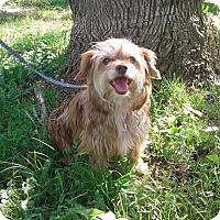 Adopt A Pet :: Reecee (ETAA) - Foster, RI