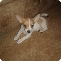 Adopt A Pet :: Bruno - Goodyear, AZ