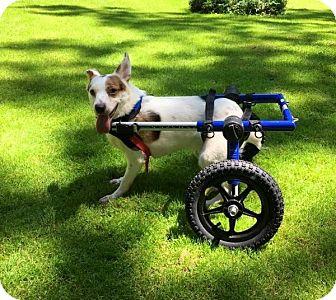 Beagle Mix Dog for adoption in Elyria, Ohio - Charlie