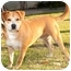 Photo 3 - Labrador Retriever/Shiba Inu Mix Dog for adoption in Marina del Rey, California - Happy