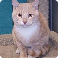 Adopt A Pet :: K-Eva1-Aaron - Colorado Springs, CO