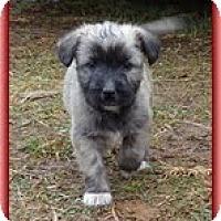 Adopt A Pet :: Little Lola - Staunton, VA