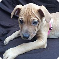 Adopt A Pet :: Georgia - East Sparta, OH