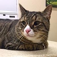 Adopt A Pet :: Jerry - LaJolla, CA
