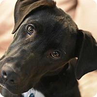 Adopt A Pet :: Lenny (Has Application) - Washington, DC