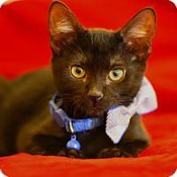 Adopt A Pet :: Yogi - Chandler, AZ