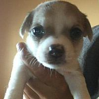 Adopt A Pet :: Otis - Phoenix, AZ