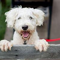 Adopt A Pet :: Brody - Fort Atkinson, WI
