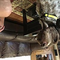 Adopt A Pet :: Gus - Carmichael, CA