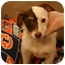 Photo 2 - Jack Russell Terrier/Jack Russell Terrier Mix Dog for adoption in Madison, Alabama - Charlie