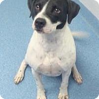 Adopt A Pet :: Jesse - Gainesville, FL