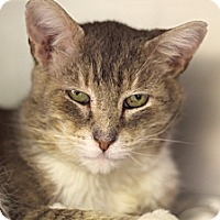 Adopt A Pet :: King Quasar - Chicago, IL