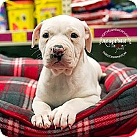 Adopt A Pet :: Pup 2 - Mesa, AZ