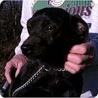 Adopt A Pet :: Mo - Jackson, TN