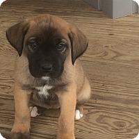Adopt A Pet :: Frankie - Bedminster, NJ