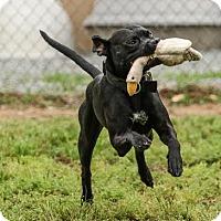 Adopt A Pet :: Twister - chouteau, OK