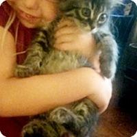 Adopt A Pet :: JoanieC - North Highlands, CA