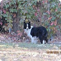 Adopt A Pet :: IZZY - Nampa, ID