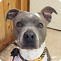 Adopt A Pet :: Stormy - Palm Springs, CA