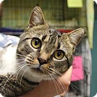 Adopt A Pet :: Diva - Warwick, RI