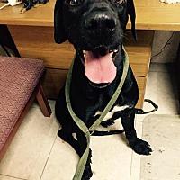 Adopt A Pet :: Titus - Del Rio, TX