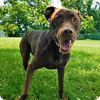 Adopt A Pet :: Jesse - Lafayette, NJ