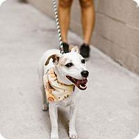 Adopt A Pet :: Mitch - Claremont - Chino Hills, CA