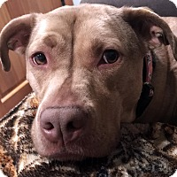 Adopt A Pet :: Eve - Courtesy Post - West Bloomfield, MI