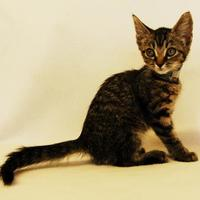Adopt A Pet :: Neo - Toccoa, GA