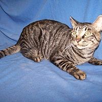 Adopt A Pet :: Maximillan - Colorado Springs, CO