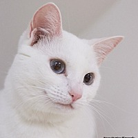 Adopt A Pet :: Clara - Knoxville, TN