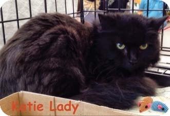 Domestic Longhair Cat for adoption in Merrifield, Virginia - Katie Lady