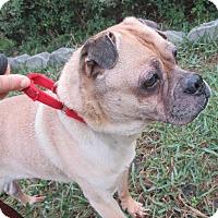 Adopt A Pet :: Brownie - Jacksonville, FL