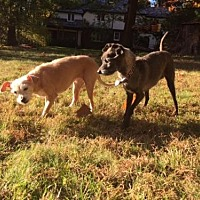 Adopt A Pet :: Bleu & Princess - Tenafly, NJ