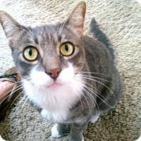 Adopt A Pet :: Dingle - Encinitas, CA