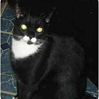 Adopt A Pet :: Poptart - N. Billerica, MA