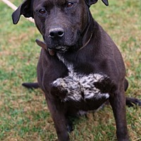 Adopt A Pet :: Bailey - Bristol, TN