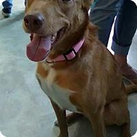 Adopt A Pet :: Mariah - San Antonio, TX
