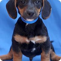 Adopt A Pet :: Kennen - Waldorf, MD