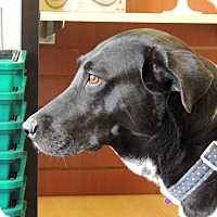 Adopt A Pet :: Maggie - Humble, TX