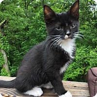 Adopt A Pet :: Remington - Morgantown, WV